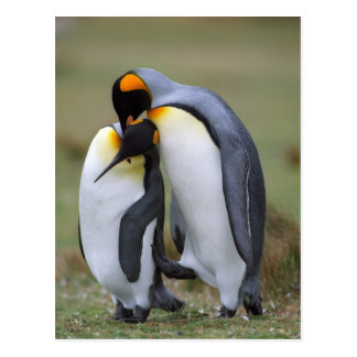Two Penguins Post Cards