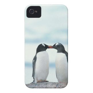 Two Penguins touching beaks iPhone 4 Case-Mate Case