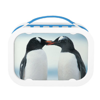 Two Penguins touching beaks Lunch Box