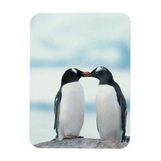 Two Penguins touching beaks Rectangular Photo Magnet