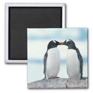 Two Penguins touching beaks Square Magnet