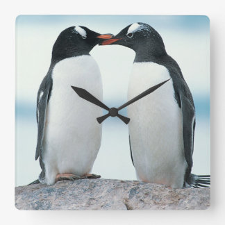 Two Penguins touching beaks Square Wall Clock