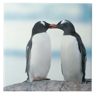 Two Penguins touching beaks Tile