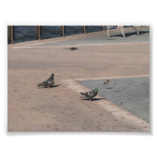 Two Pigeons and a House Sparrow 1 Photo Print