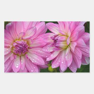 Two pink dahlia flowers rectangular sticker