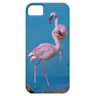 Two Pink Flamingos iPhone 5 Cases