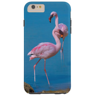Two Pink Flamingos Tough iPhone 6 Plus Case