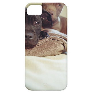 Two pit bull terriers sitting indoors, close-up barely there iPhone 5 case