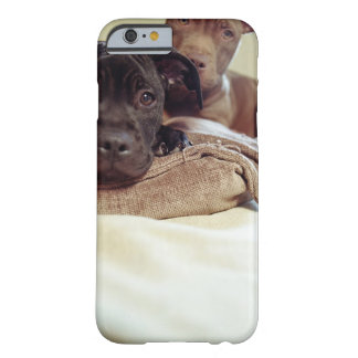 Two pit bull terriers sitting indoors, close-up barely there iPhone 6 case