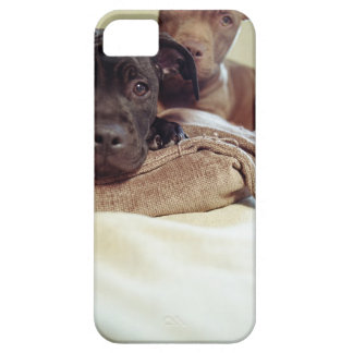 Two pit bull terriers sitting indoors, close-up case for the iPhone 5