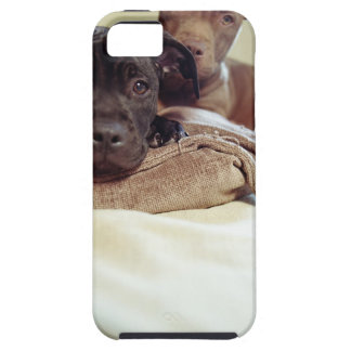 Two pit bull terriers sitting indoors, close-up iPhone 5 case