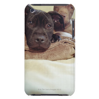 Two pit bull terriers sitting indoors, close-up iPod touch case