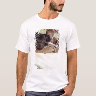 Two pit bull terriers sitting indoors, close-up T-Shirt
