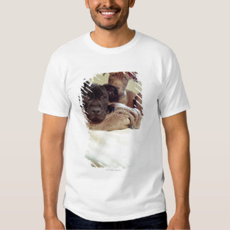 Two pit bull terriers sitting indoors, close-up t shirts
