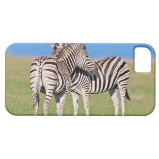 Two Plains zebra (Equus quagga) on coastal iPhone 5 Cover