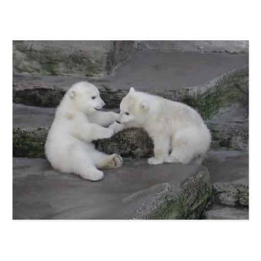 Two Polar bear cubs Post Cards