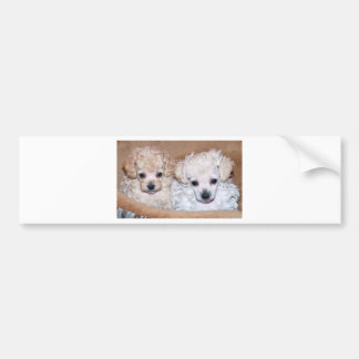 Two Poodle puppies brother sister Bumper Sticker
