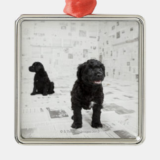 Two Portuguese Water Dog puppies in a room Christmas Ornament