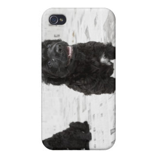 Two Portuguese Water Dog puppies in a room iPhone 4 Cover