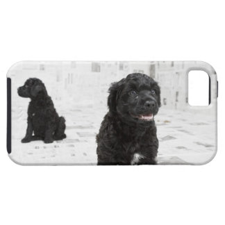 Two Portuguese Water Dog puppies in a room Tough iPhone 5 Case