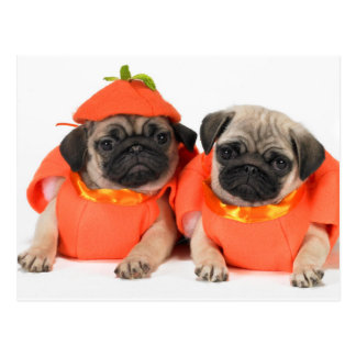 Two Pugs Postcards