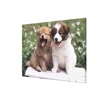 Two puppies sitting together canvas print