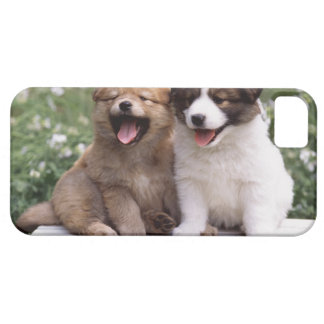 Two puppies sitting together case for the iPhone 5