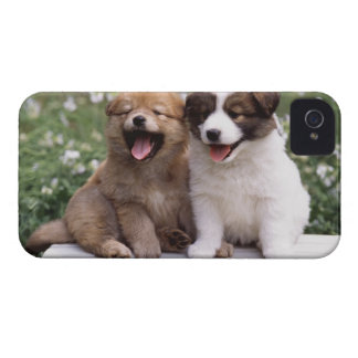 Two puppies sitting together iPhone 4 cover