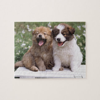 Two puppies sitting together jigsaw puzzle