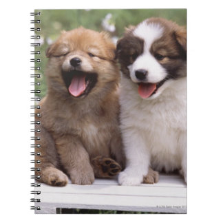 Two puppies sitting together notebook