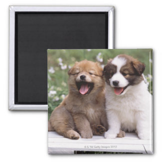 Two puppies sitting together square magnet