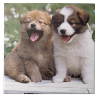Two puppies sitting together tile