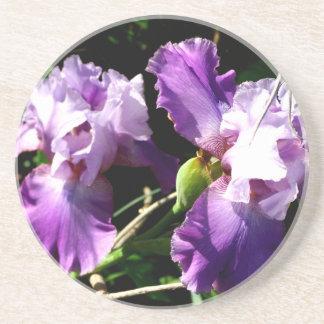 Two Purple Iris Flowers Coaster