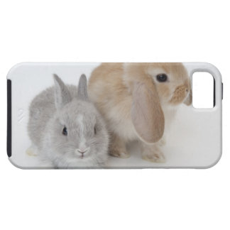 Two rabbits.Netherland Dwarf and Holland Lop. iPhone 5 Cover