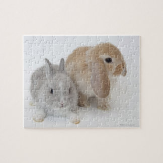 Two rabbits.Netherland Dwarf and Holland Lop. Jigsaw Puzzle