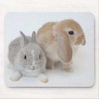Two rabbits.Netherland Dwarf and Holland Lop. Mouse Mat