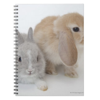 Two rabbits.Netherland Dwarf and Holland Lop. Note Book