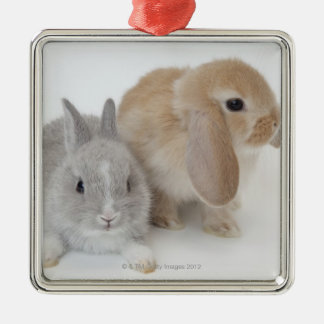 Two rabbits.Netherland Dwarf and Holland Lop. Silver-Colored Square Decoration