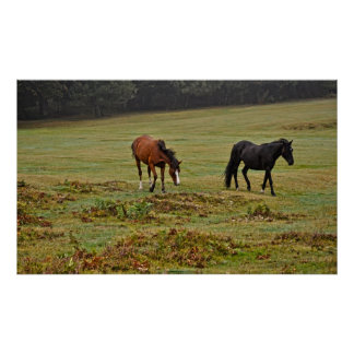 Two Rare New Forest Ponies of Hampshire England Poster