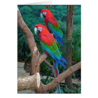 Two Red and Green Winged Macaws Ara Chloropterus Greeting Card