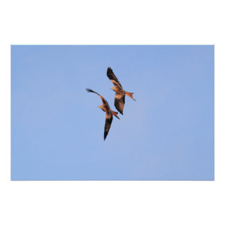 Two Red Kite Print