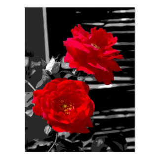 TWO RED ROSES POST CARD