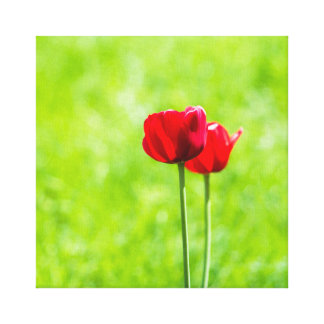Two red tulip flowers canvas print