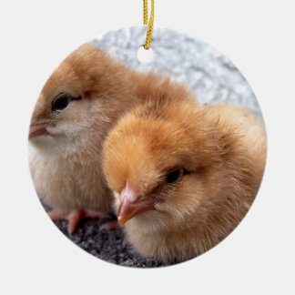 two rhode island red chicks photo christmas ornament