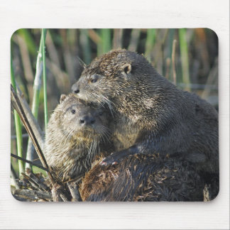 Two River Otters Mousepads
