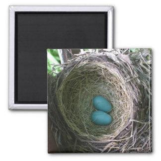 Two Robin's Eggs in Nest Magnet