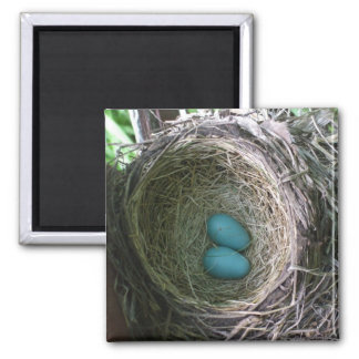 Two Robin's Eggs in Nest Square Magnet