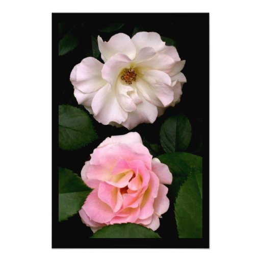 'Two Roses' Photographic Print