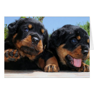 Two Rottweiler Puppies On A Step Card