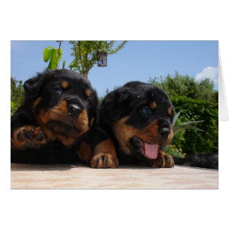Two Rottweiler Puppies On A Step Greeting Card
